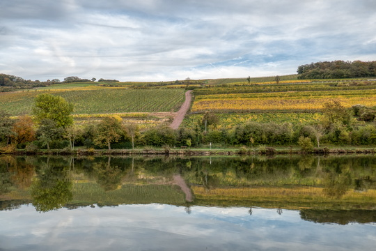 Vineyards near the Moselle river