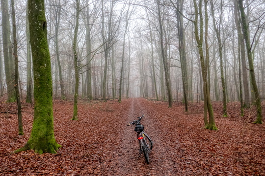 Morning commute in the foggy forest