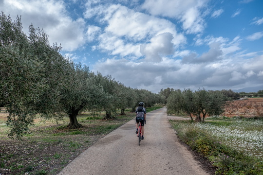 Bike among the olive trees