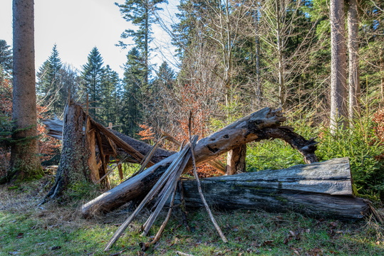 Collapsed tree