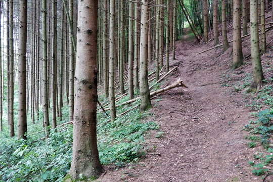 Path in the forest between Dommeldange and Kirchberg