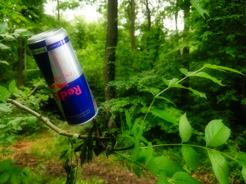 Redbull grows on trees