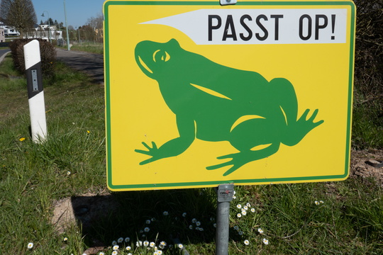 Watch for migrating frogs