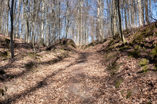 Forest track near Schetzel