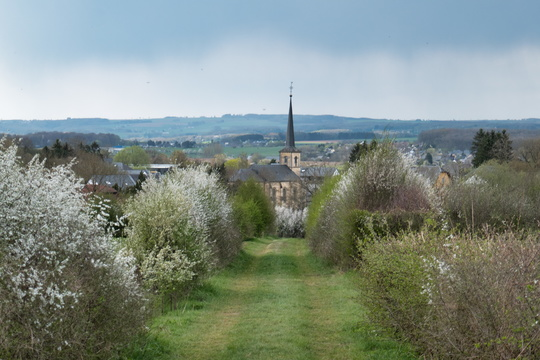 The village of Noerdange