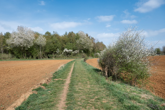 A good path or bad track near Differdange