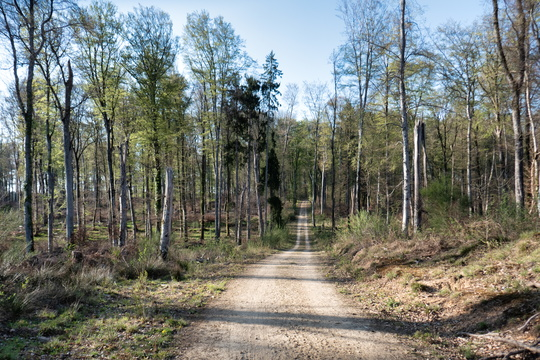 Forest track near Koerich