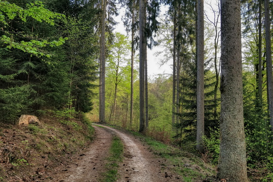 Forest track in Grünewald