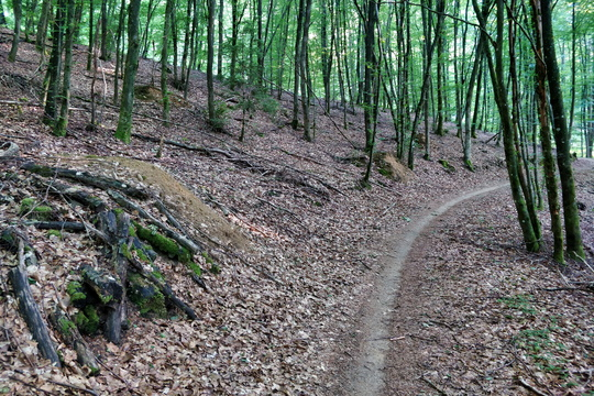 Forest path near Hobscheid