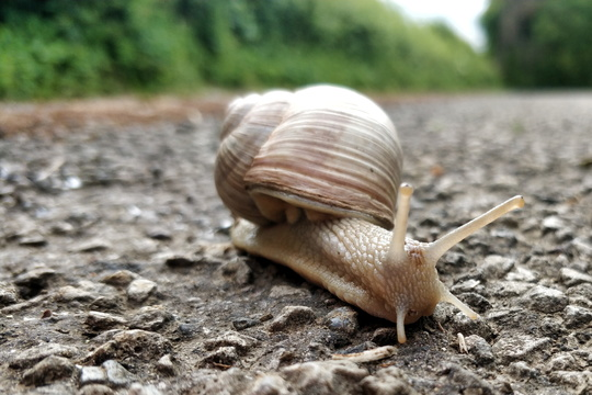This snail is on a road that is unlikely to be visited