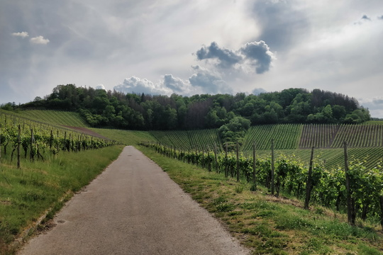 Vineyards near the Moselle
