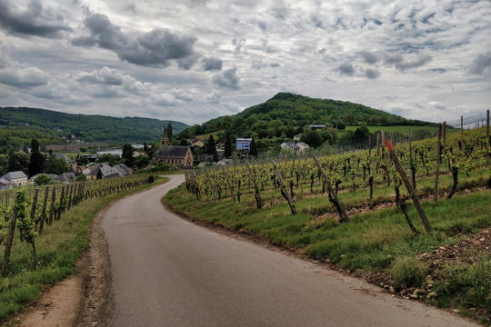 Vineyards near Schengen