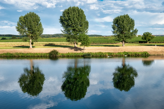 Tree reflections on the Moselle