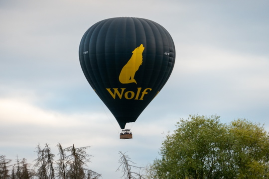 Wolf balloon just took off