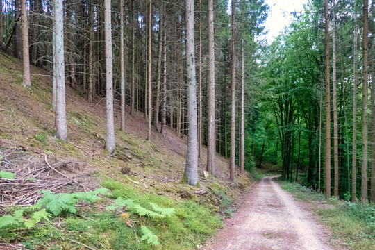 Forest track in Mamerdal