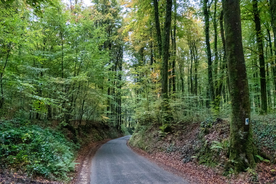 Forest road between Septfontaines and Ehner