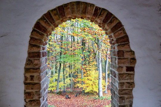 Arch to the forest