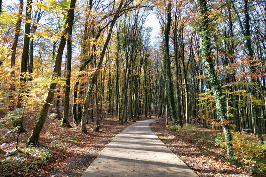 Autumn colours on the cycleway near Redange-sur-Attert