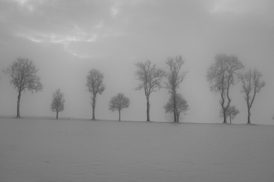 Trees between fog and snow