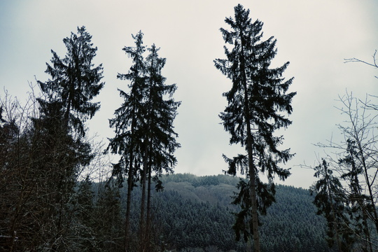 Trees and forest on CFL-3