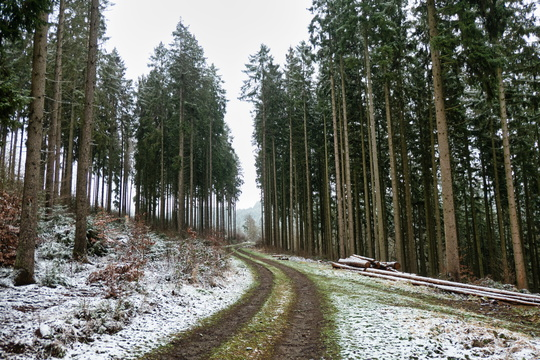 Forest track near Clervaux