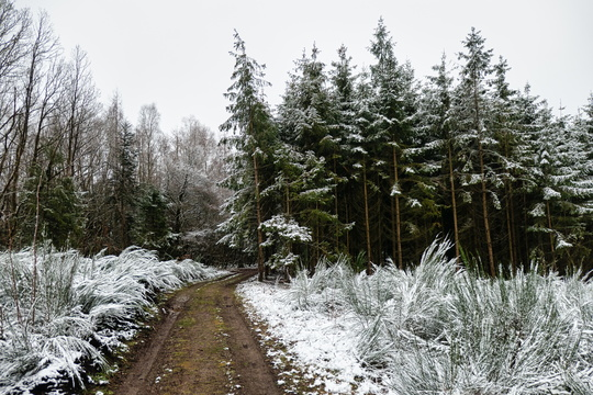 Forest track near Reulen