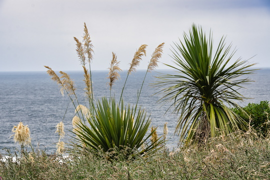 Plants by the sea shore