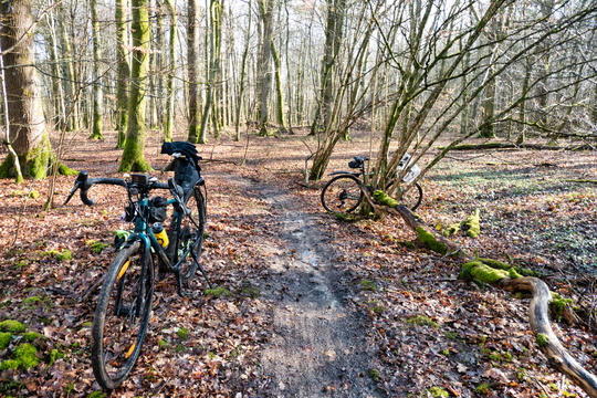 Bikes in the forest