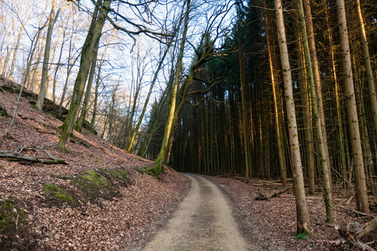 Forest track near Itzig
